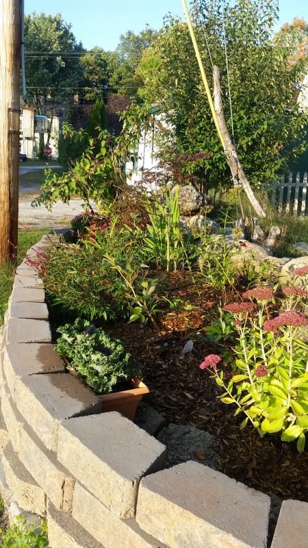 Roadside garden tree side-trnd
