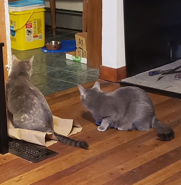 Spot and Rainey on paper bag 2