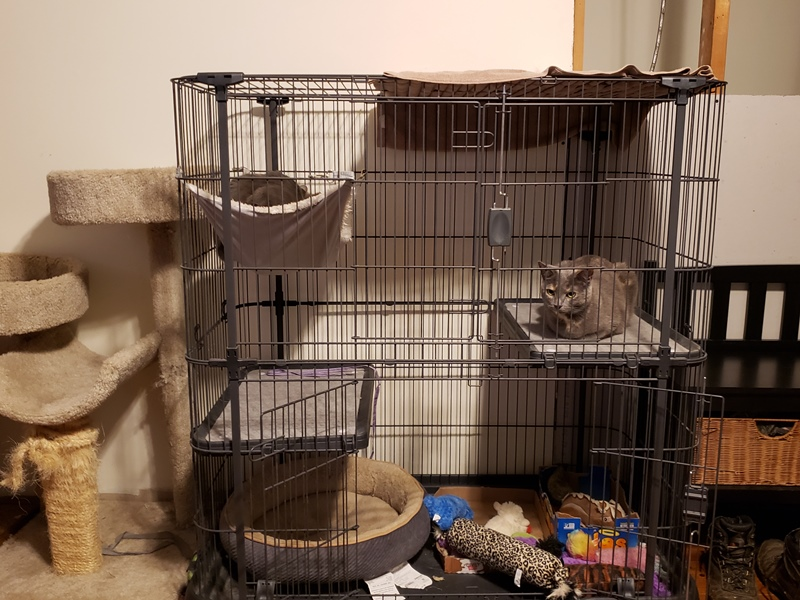 Cats after cage opened