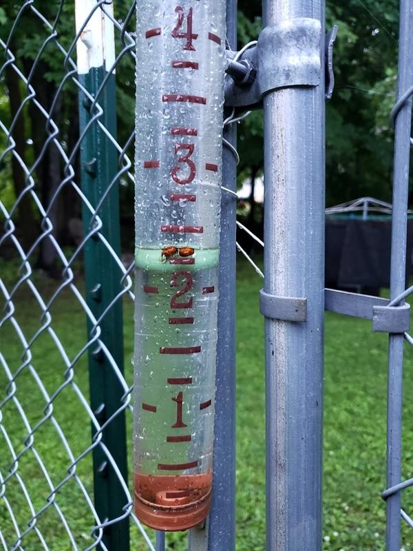 Rain on 6-29-trnd