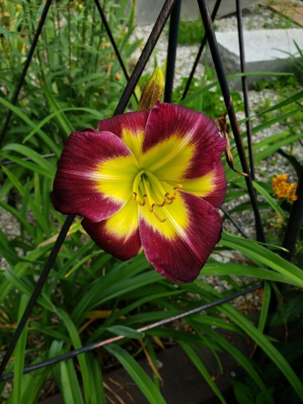 Day Lily Night Beacon driveway-trnd