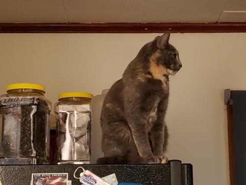 Spot on fridge looking at Rainey