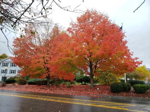 Autumn Blaze 10-15