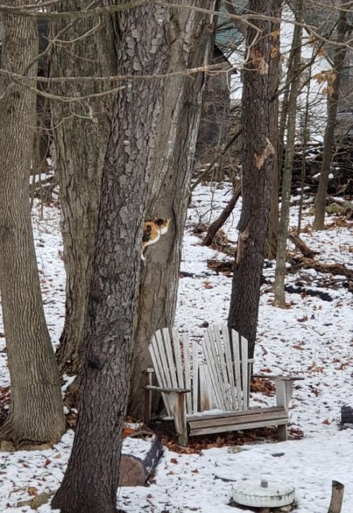 Neighbors cat in tree-trnd