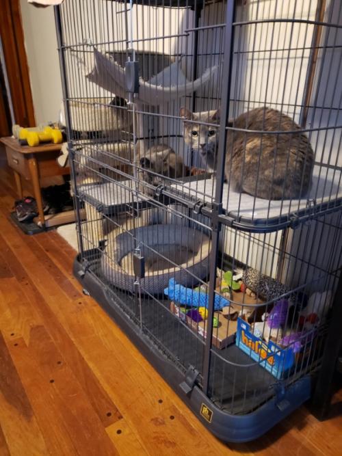 Cats in jail for pellet transfer-trnd