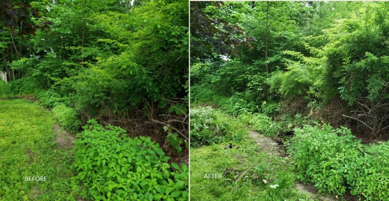 Stream before-after compare-sm