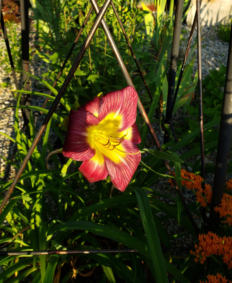 Day lily under windmill-trnd