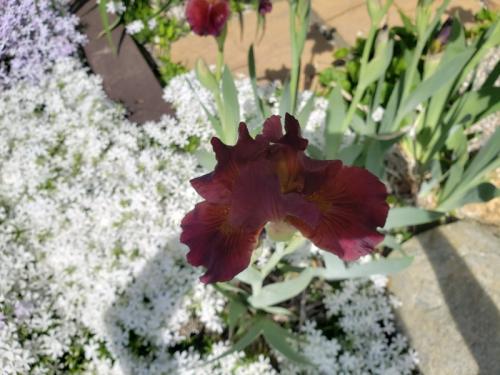 Iris single by driveway