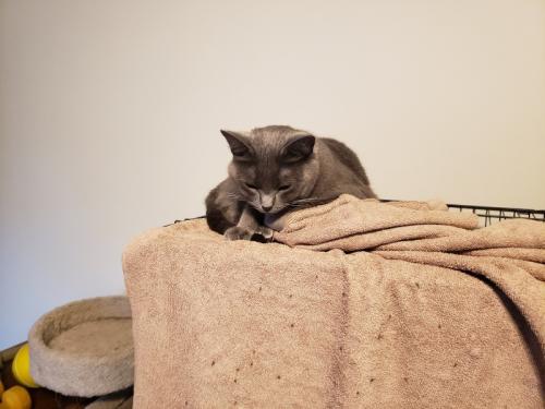Rainey on towel 1