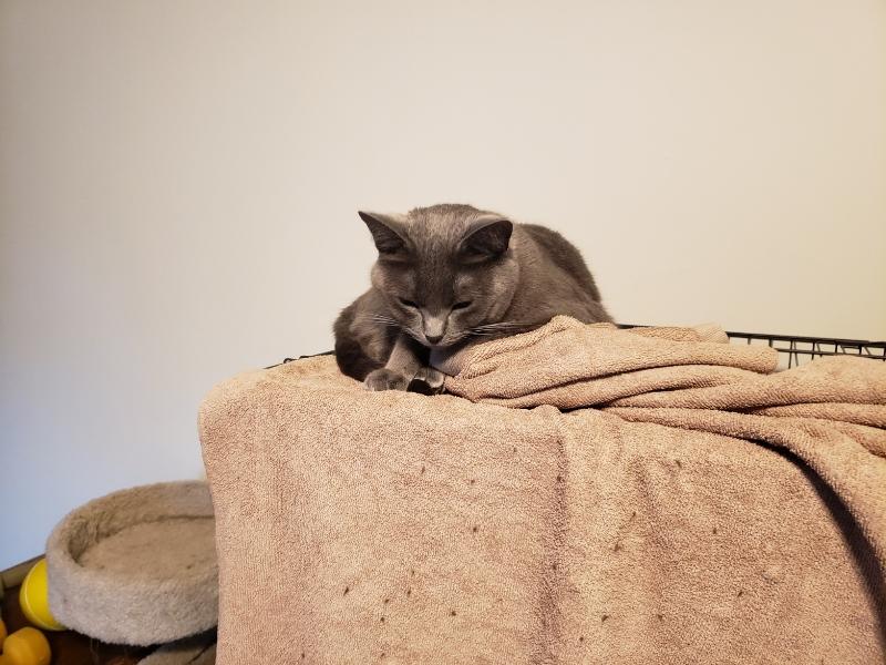 Rainey on towel 2