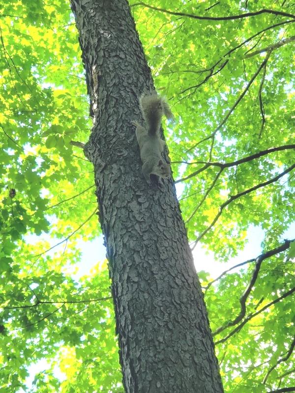Irate squirrel-trnd