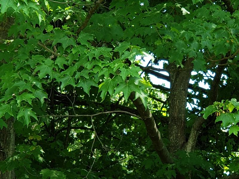 Widowmaker in back yard-Horizontal