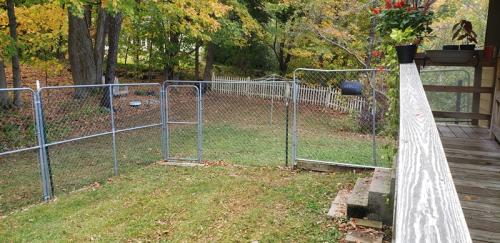 Leaves in back yard 2