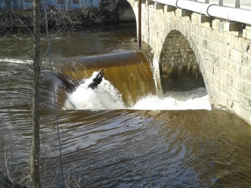 River at bridge2