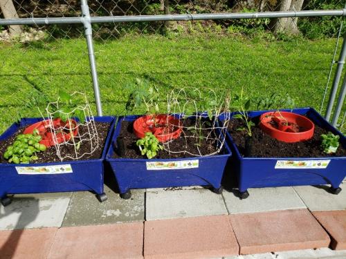 Vegies planted