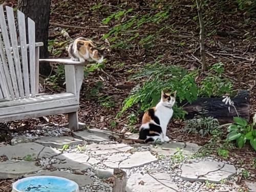 Neighbors cats on chair