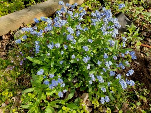 Mystery Blue flowers