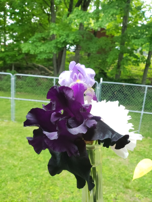 Bouquet 2-trnd