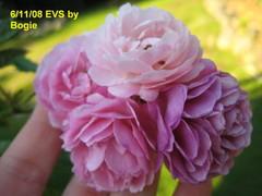 Evs61108