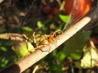 Spidersm
