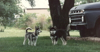 Bogie_and_argent_pups_1986