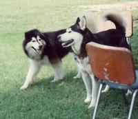 Bogie_and_leroy_1989