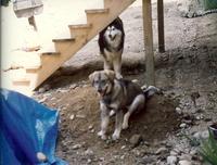 Bogie_and_niki_1989