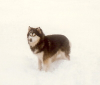 Bogie_in_the_snow